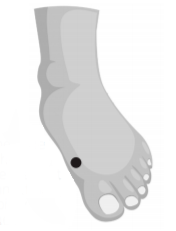 diagram of foot showing meridian point on the inner side