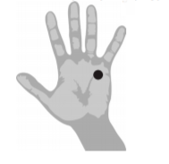 diagram of hand showing the meridian point on the palm