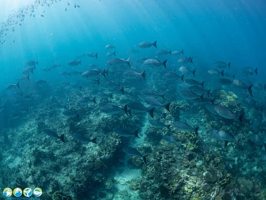 exmouth whale shark tour begins with a snorkel on the reef to view schools of fish on the reef