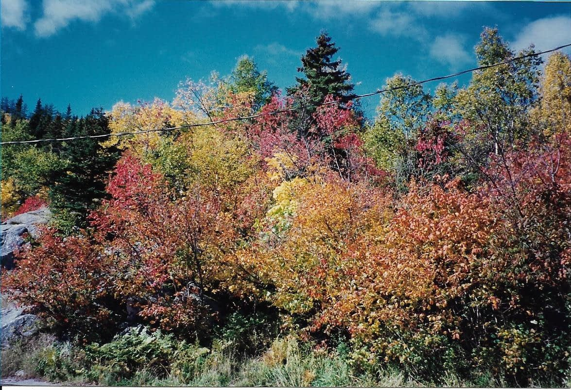 trees in shades of green, orange, yellow and red