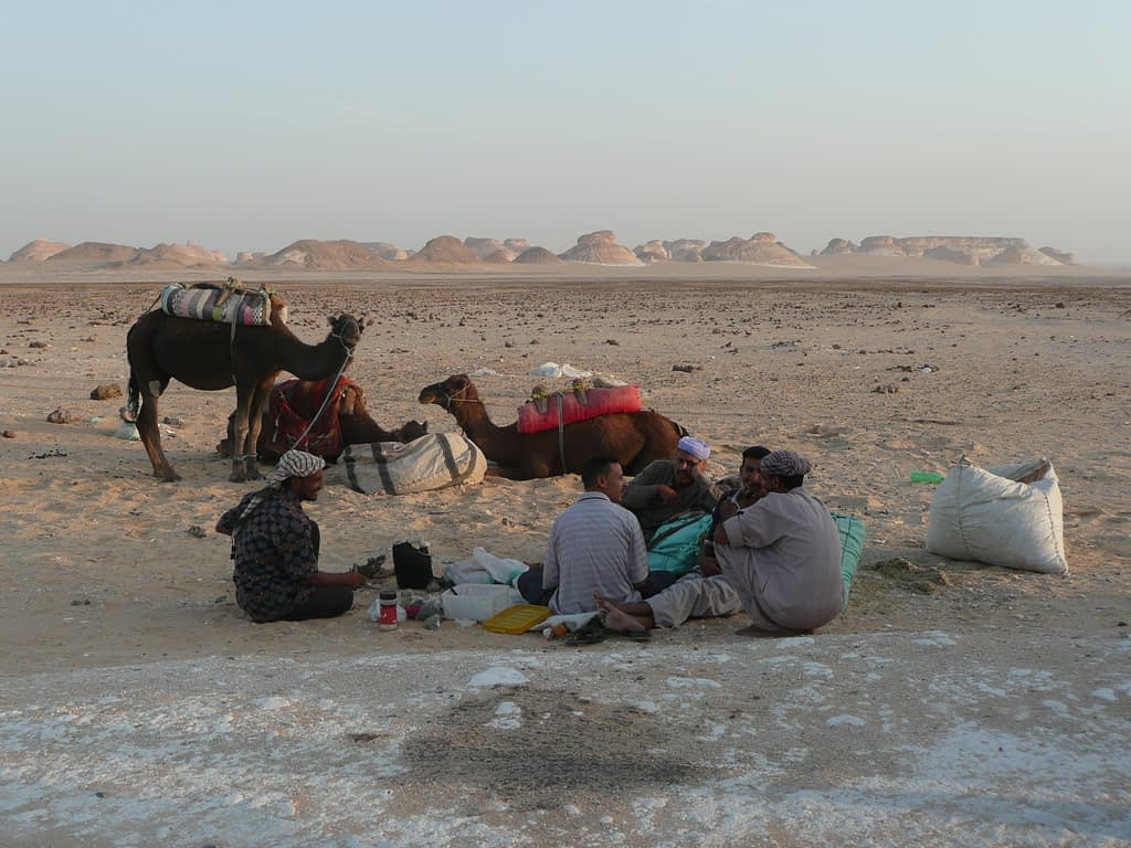 three arab men sitting by road side with 2 camels in the white desert